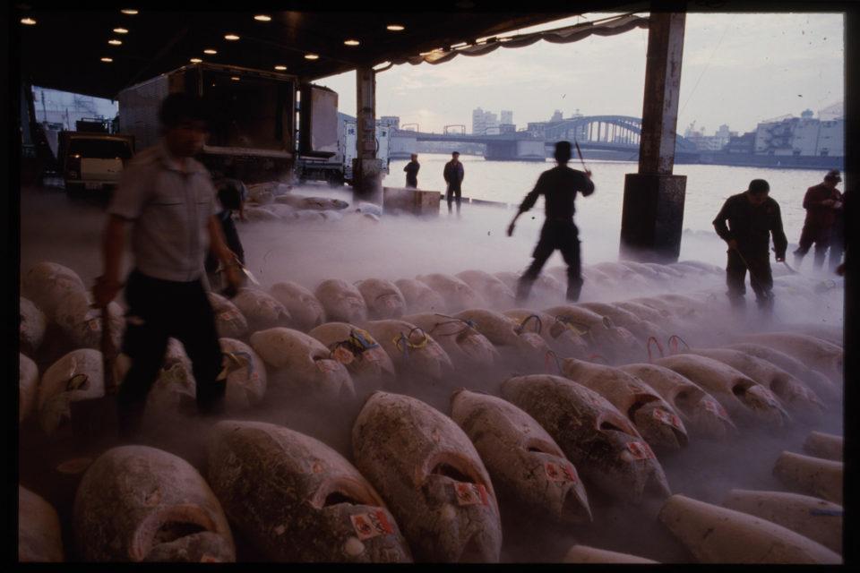 Tsukiji Fishmarket, Tokyo, 1986