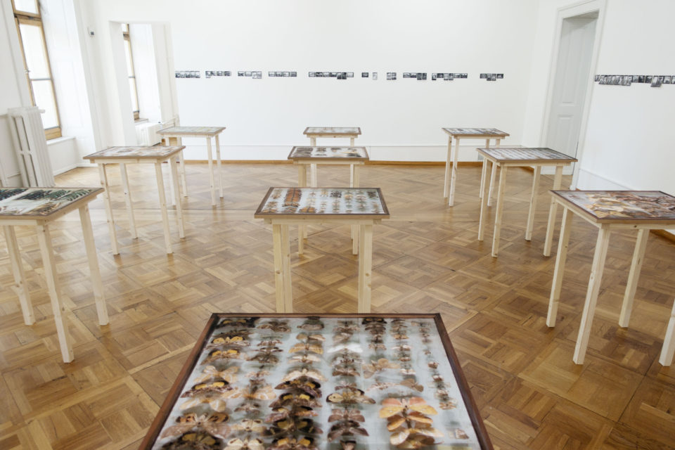 Ebifananyi installation at the exhibition 'Flurina Rothenberger / Andrea Stultiens', Pasquart Photoforum, Biel (CH) in 2016.