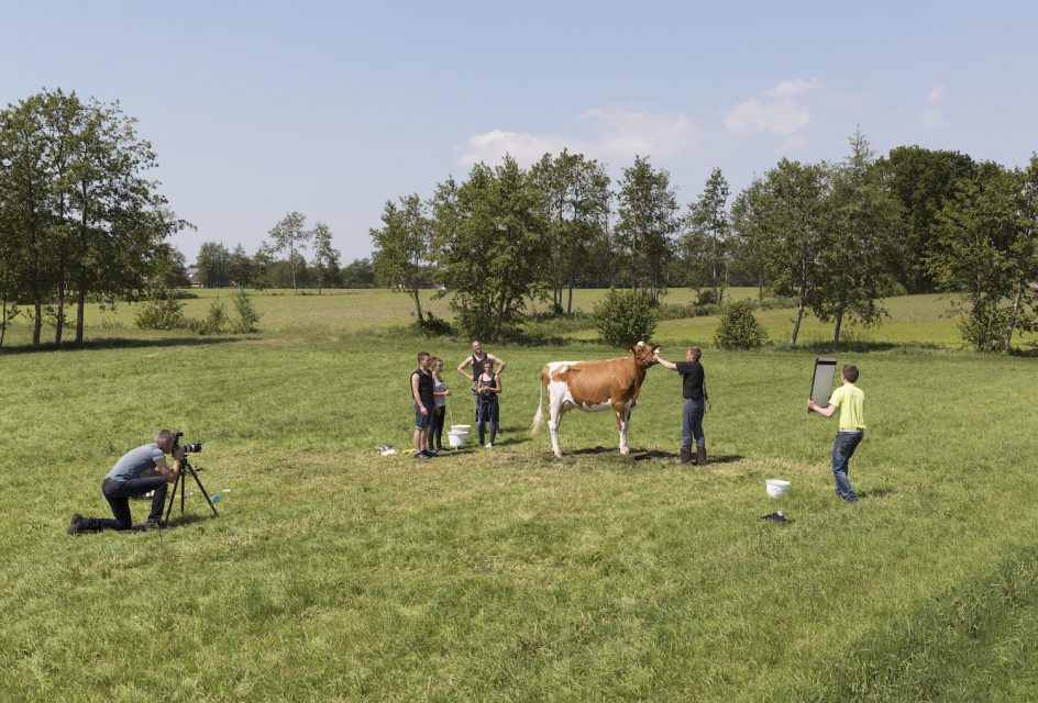 Photographing a cow, Damwoude (2015)
