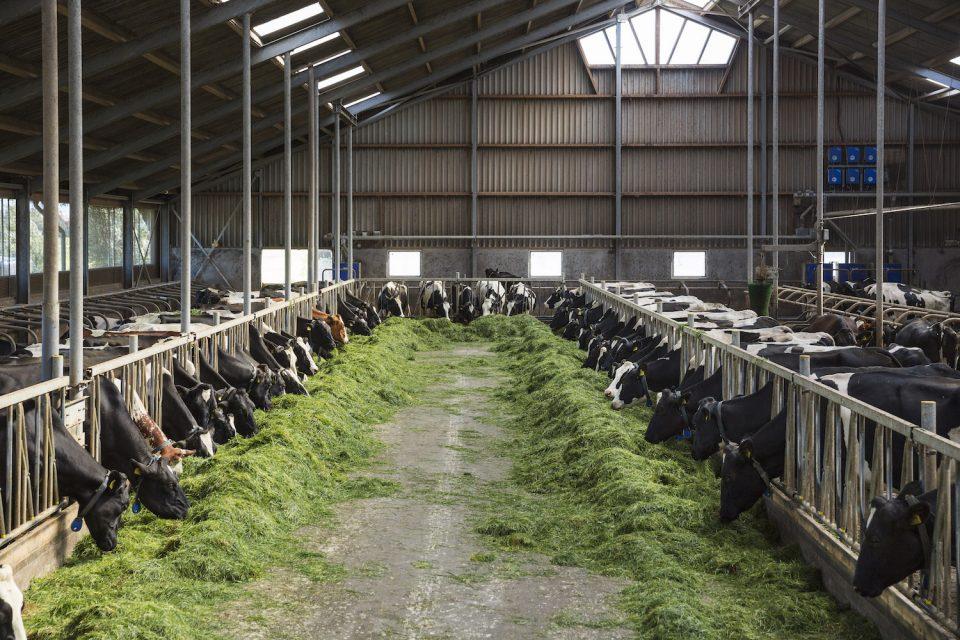 Grass in a barn, Heidenskip (2015)