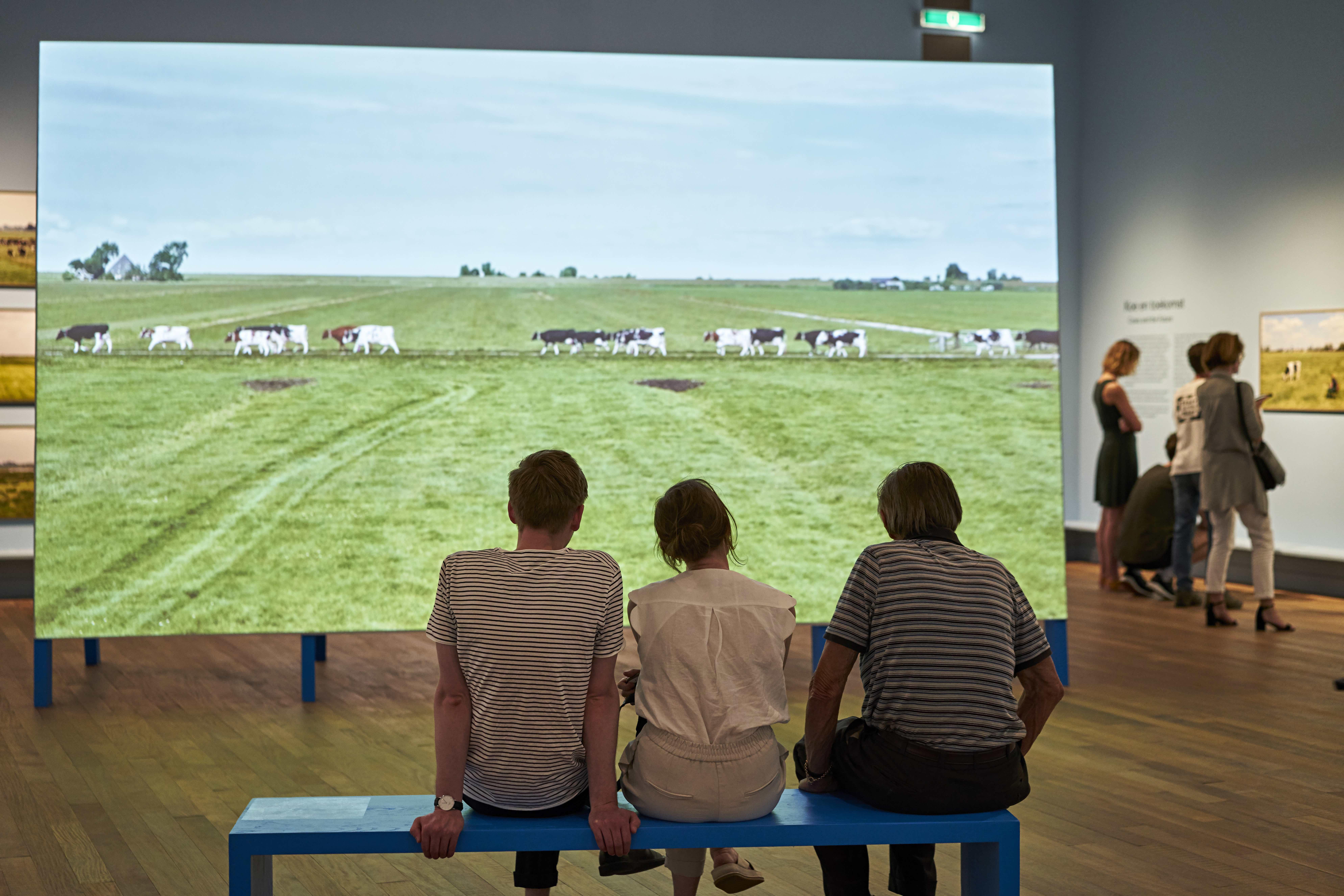 270 cows of Siem de Boer walking back to the farm.
