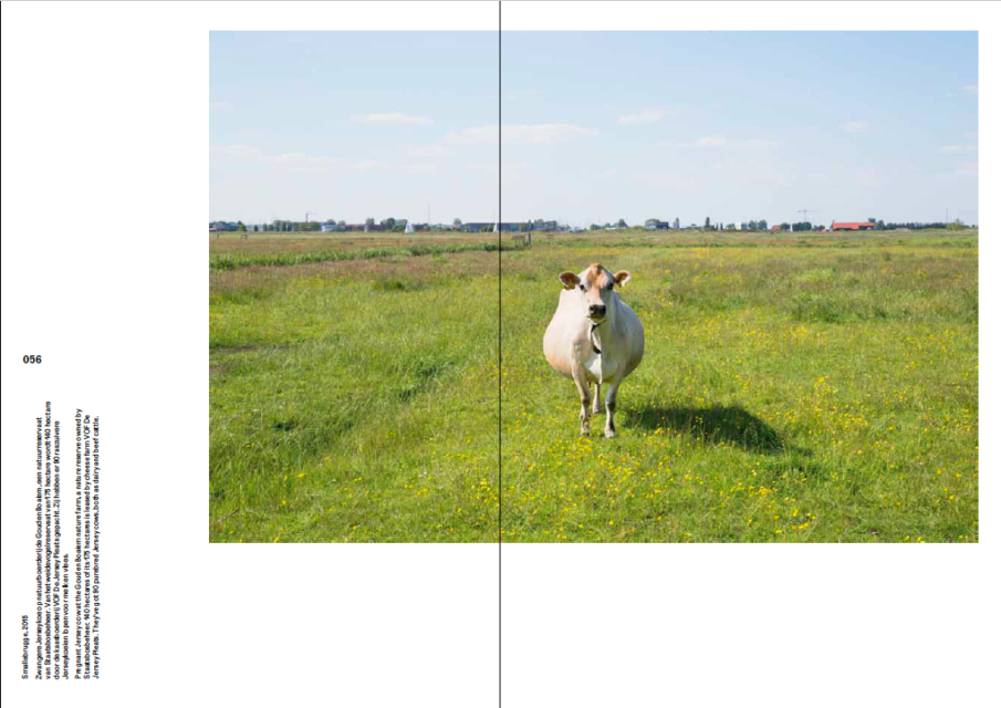 Pregnant Jersey Cow, Smallebrugge (2015)  Spread from the book