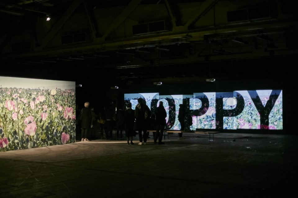 Poppy at Fotofestiwal Warsaw, June 2016