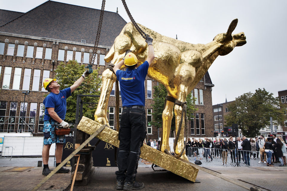 Placing the Golden Calf on Utrechts famous square 'De Neude'